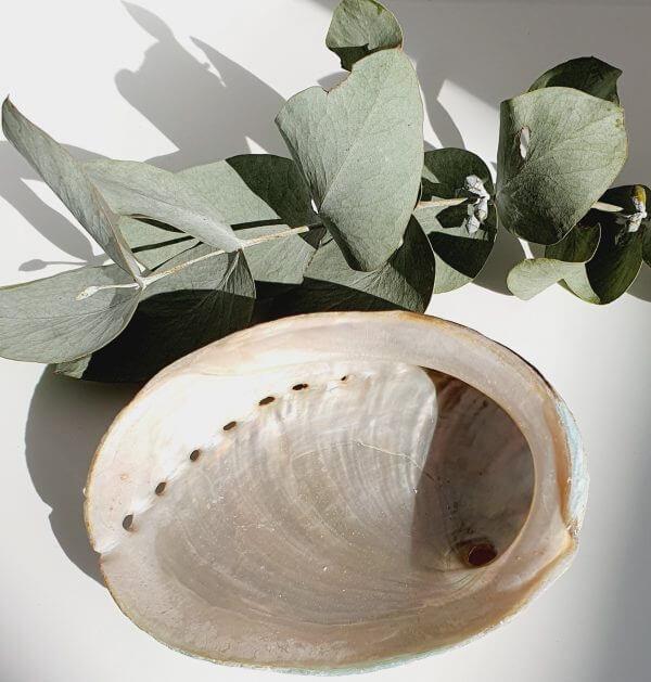 Mirosuna Abalone Shell